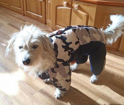 Warm Dog Jacket - generalpremiumstore photo review