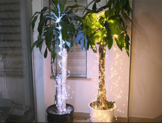 萤火虫束灯,萤火虫束灯